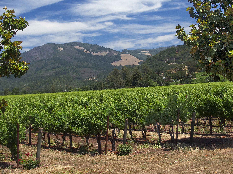 wine tasting sonoma county