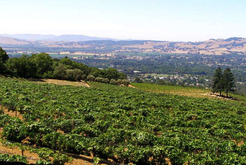 Hanzell Vineyards, Sonoma, California