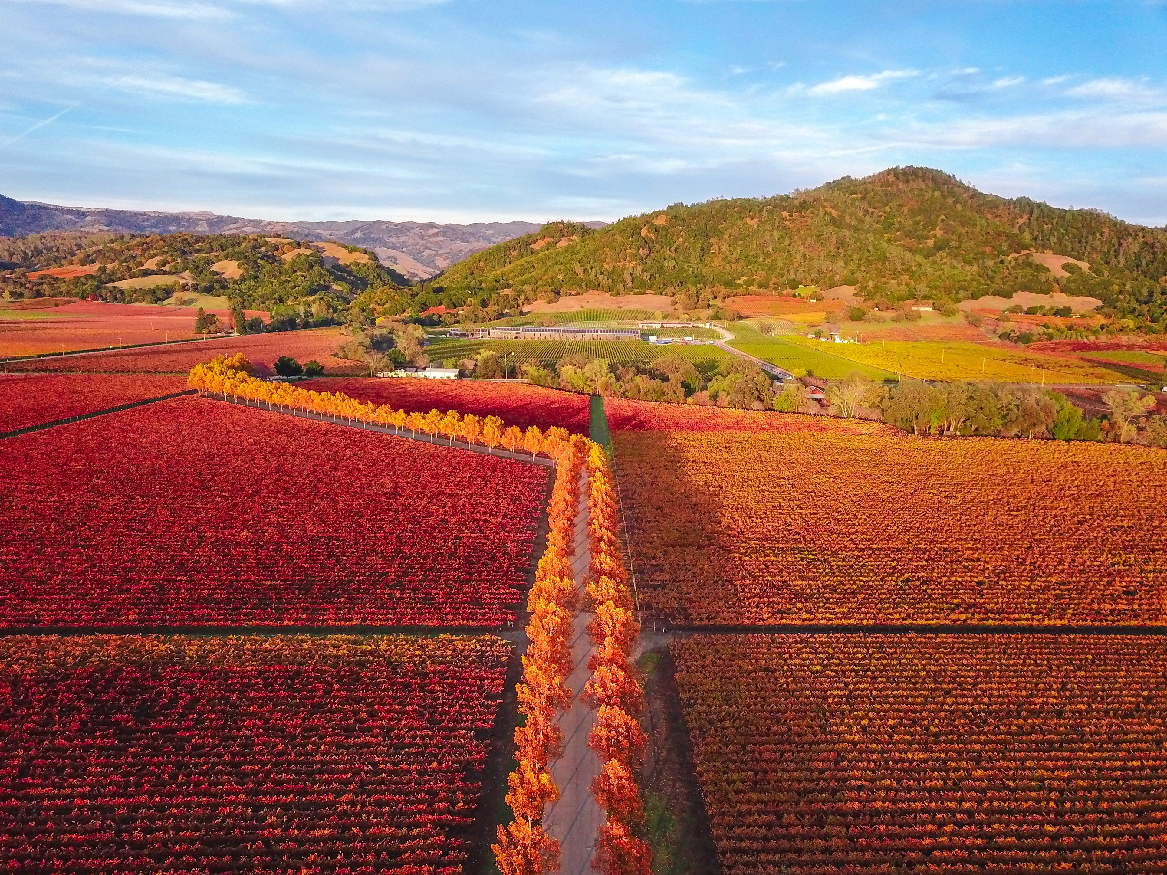 The fall colors pop in Stonestreet Winery in Alexander Valley near Healdsburg, Sonoma County, California