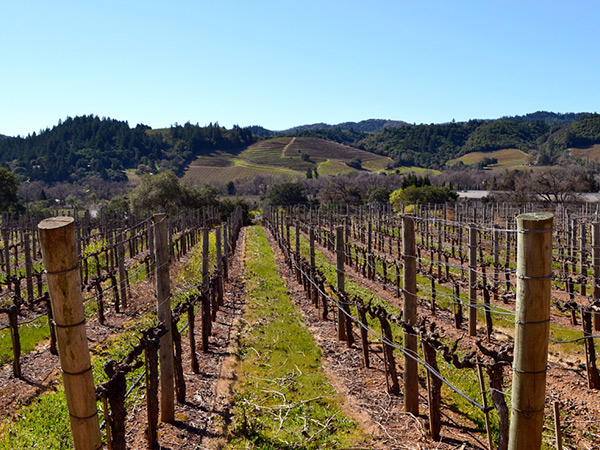 cast wines sonoma county