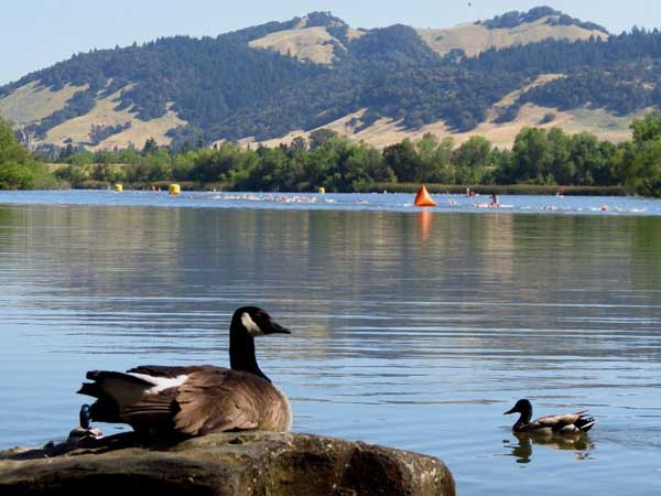 Summer camps in Spring Lake Regional Park in Sonoma County, California