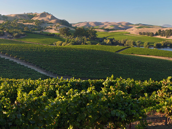 Carneros wine region in Sonoma County, California
