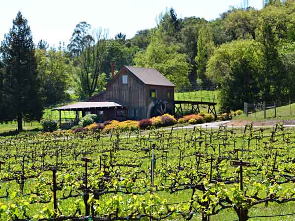 Mill Creek Vineyards and Winery, Healdsburg, California