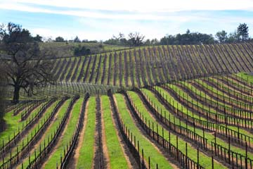 Winter Wineland, Sonoma County, California