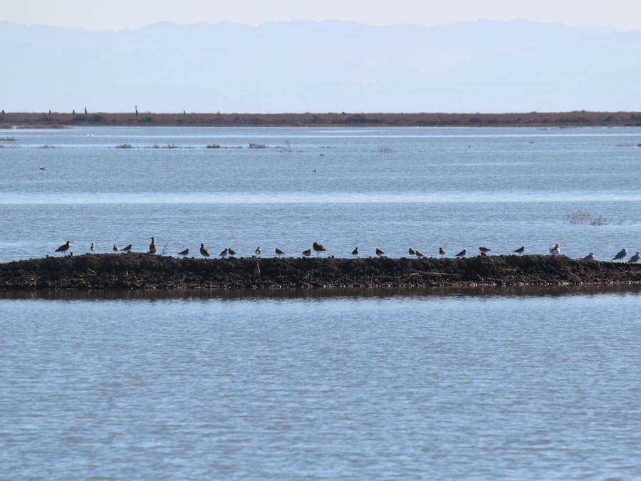 Birds sit on a log in the middle of the bay