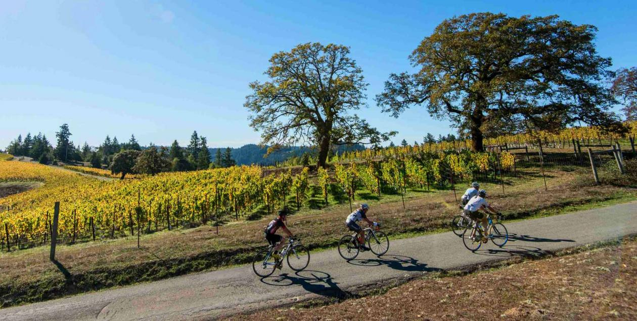 Cycling alongside vineyards in Sonoma County