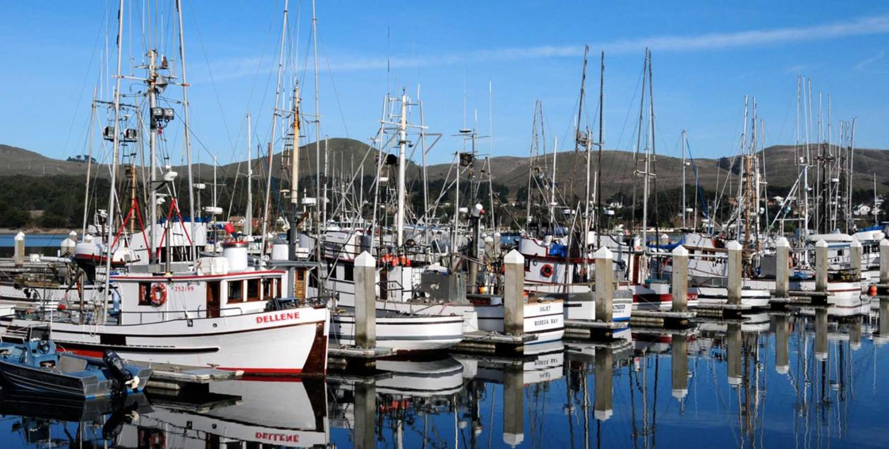 Bodega Bay Marina with boats