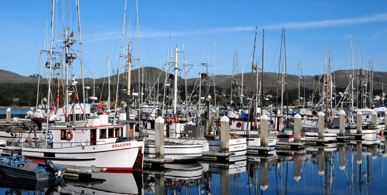 Sailboats in Spud Point Marina, Bodega Bay