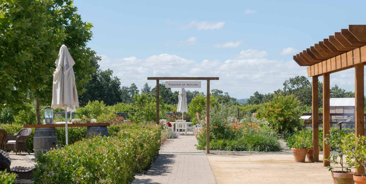 Taste biodynamic wines at DeLoach Vineyards in Sonoma County