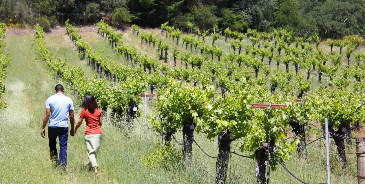 A couple walking in a vineyard in Sonoma County in spring