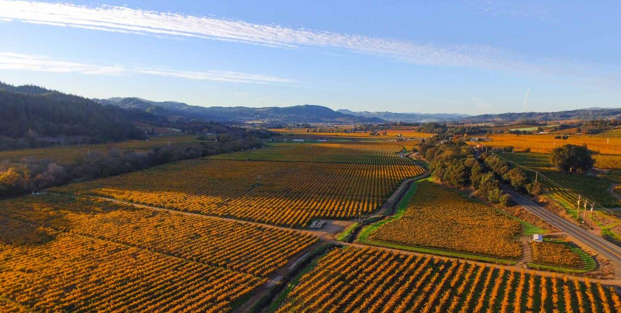 aerial view of Dry Creek Valley in Sonoma County