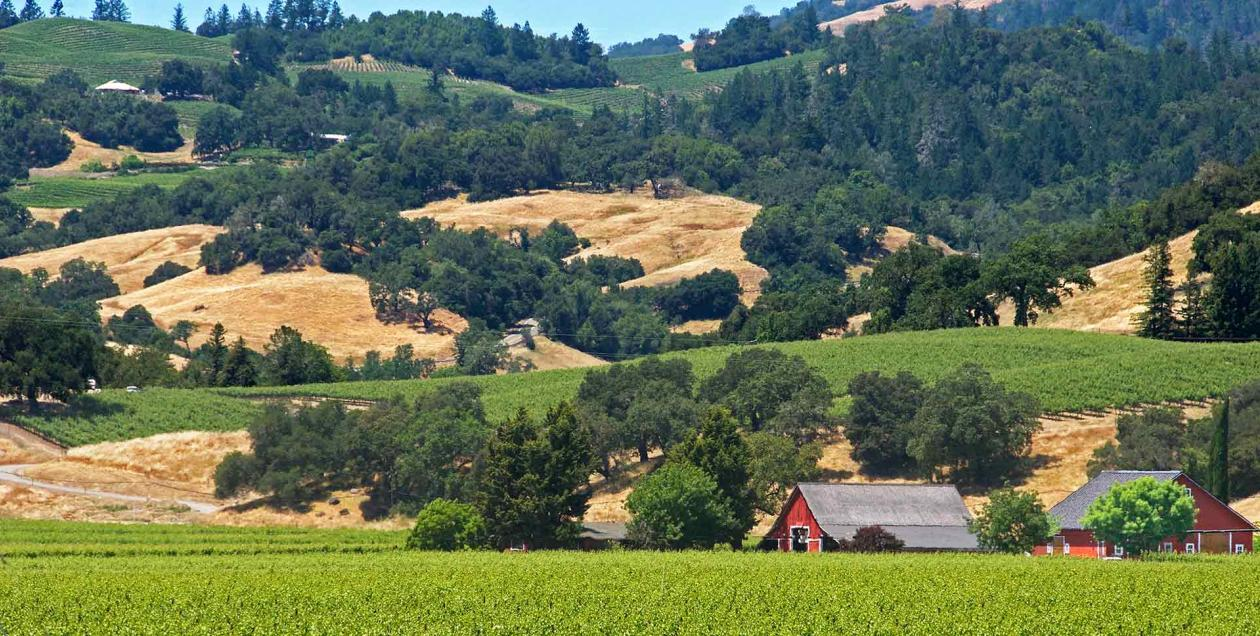 Red barn and grape vines in Alexander Valley AVA