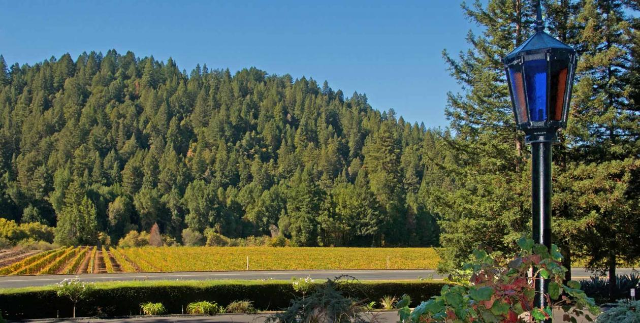 The view of vineyards in the fall in Russian River Valley from the deck at	Korbel Champagne Cellars, Sonoma County