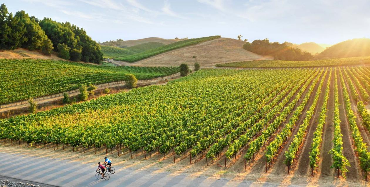vineyard bikers