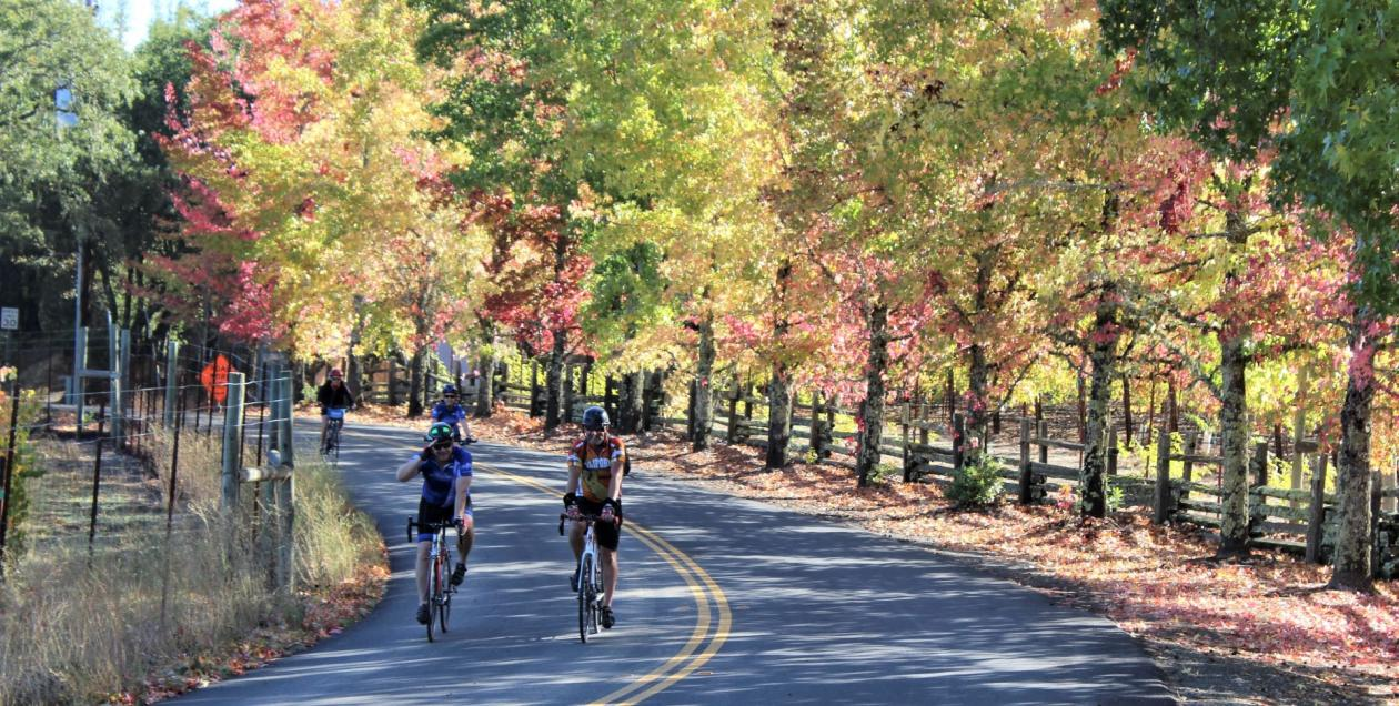 A group of cyclists rides past colorful trees in Sonoma County