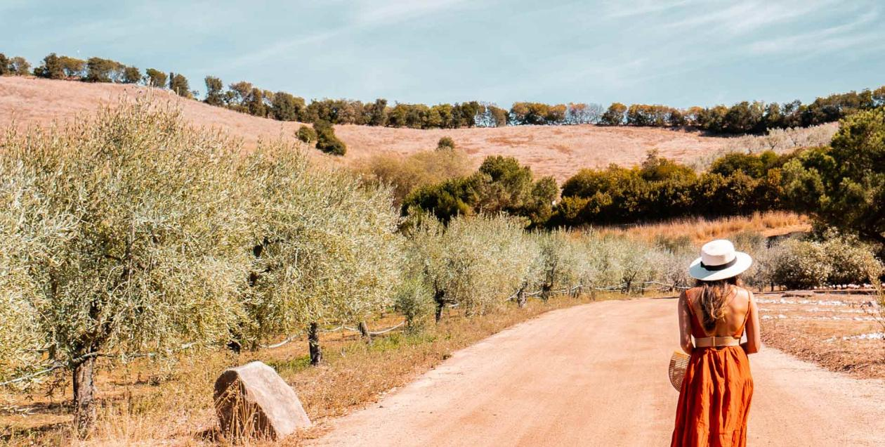 A woman walks along an olive grove