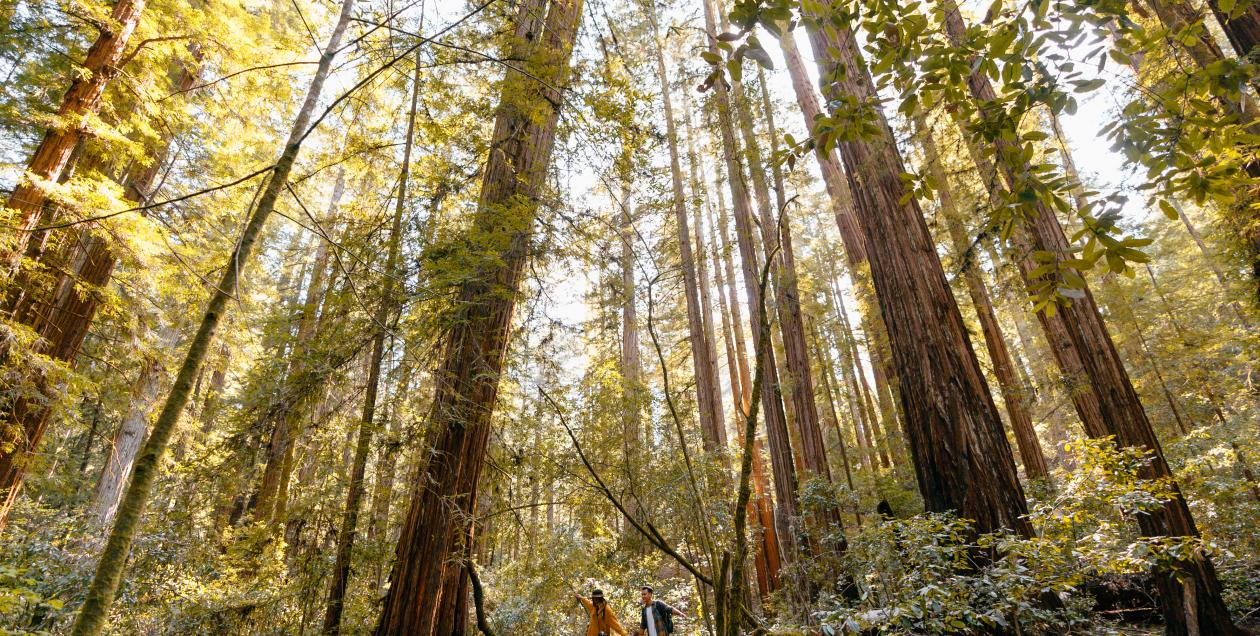 parks_armstrong_redwoods_state_natural_reserve_guerneville_by_mariah_harkey_sonoma_county_014.jpg