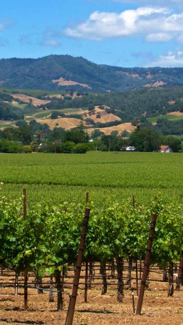 Sonoma County Scenic vineyard