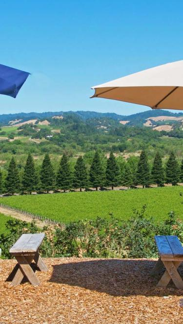 picnic tables in Sonoma County Vineyard