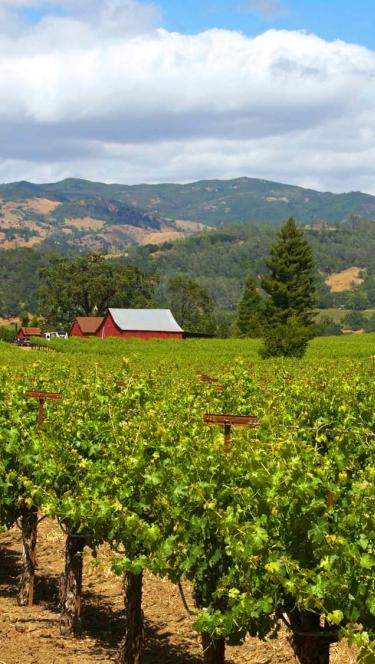 Sonoma wine country vineyard