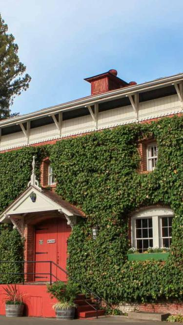 The ivy-covered, historic winery on a sunny day