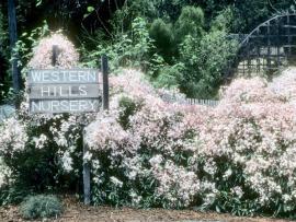 Western Hills Garden