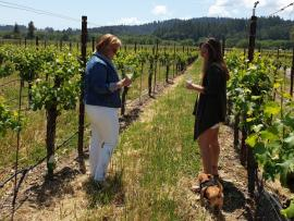 Harvest Vineyard Walk & Tasting with Winemaker Photo