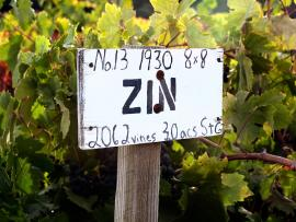 Saini Vineyards, ZIN sign in vineyard