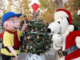 Charlie Brown Christmas Tree Grove Photo