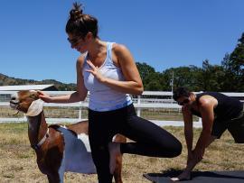 Goat Yoga at Charlie's Acres in Sonoma Photo