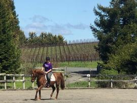 A person rides a horse in front of vineyards