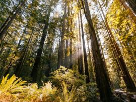 The Redwood Experience at Jack London Park Photo