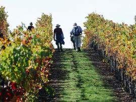 Fall Vineyard Hike at Jordan Photo