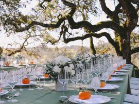Olive Harvest Celebration and Lunch at Jordan Photo