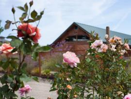 The view of Winery Barn from our rose garden