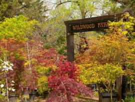 Wildwood Nursery