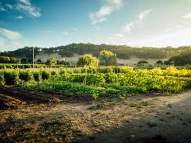 Imagery vineyards and biodynamic gardens