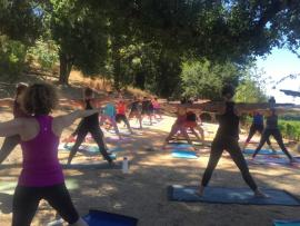 Yoga in the Vineyards with Molly Vogel