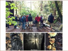 Virtual Event: Orientation for Sonoma County Parks Volunteers Photo