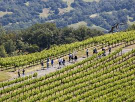 Earth Week Vineyard Hikes Photo