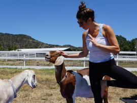 Yoga with Rescued Goats Photo