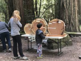redwood_rounds_family_day_600.jpg