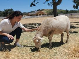 Happy Place: An Integrative Wellness Retreat with Rescued Animals Photo