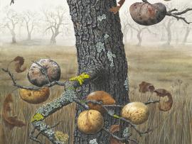 Painting Oak Branches and Galls in Gouache with Lucy Martin Photo