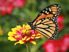 Beckoning Butterflies, Birds and Bees to the Garden Photo