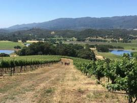 Hike and Taste in the Kunde Vineyards Photo