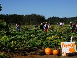 SRJC SHONE FARM FALL FESTIVAL Photo