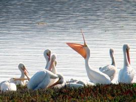 Winter Wetland Birding Outing with Jasmine Dingler and Allison Titus Photo