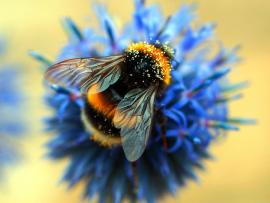 Artxcursion Presents: Bumblebees & Blooms Photo