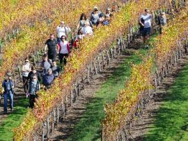 Fall Vineyard Hike Photo